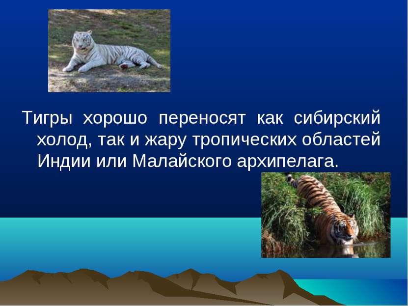 Тигры хорошо переносят как сибирский холод, так и жару тропических областей И...
