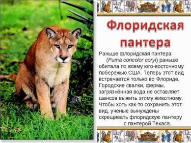 Раньше флоридская пантера (Puma concolor coryi) раньше обитала по всему юго-в...