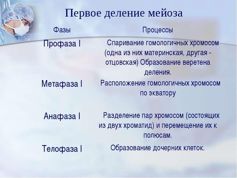 Первое деление мейоза Фазы Процессы Профаза I Спаривание гомологичных хромосо...