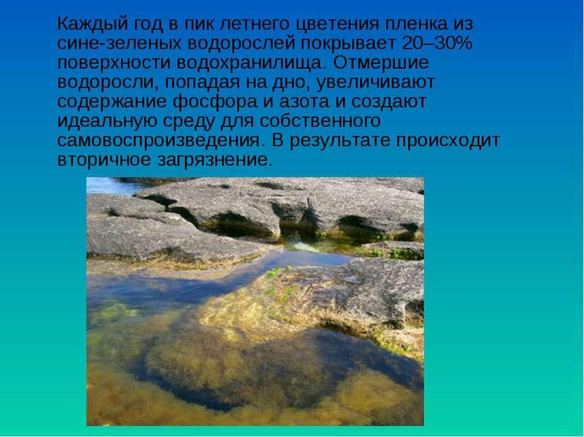 Каждый год впик летнего цветения пленка из сине-зеленых водорослей покрывает...