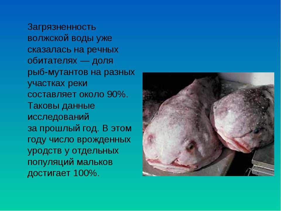 Загрязненность волжской воды уже сказалась наречных обитателях— доля рыб-му...