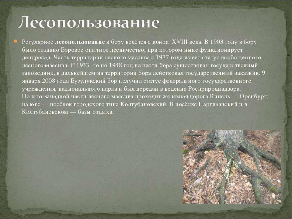 Регулярное лесопользование в бору ведётся с конца XVIII века. В 1903 году в б...