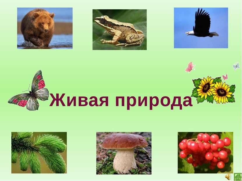 Неживая природа Живая природа