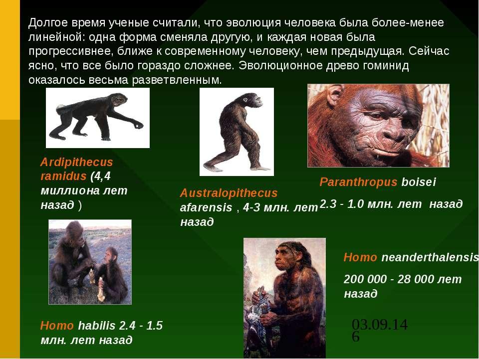 Долгое время ученые считали, что эволюция человека была более-менее линейной:...