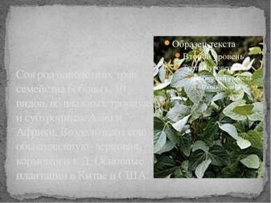 Соя род однолетних трав семейства бобовых. 10 видов, во влажных тропиках и су...