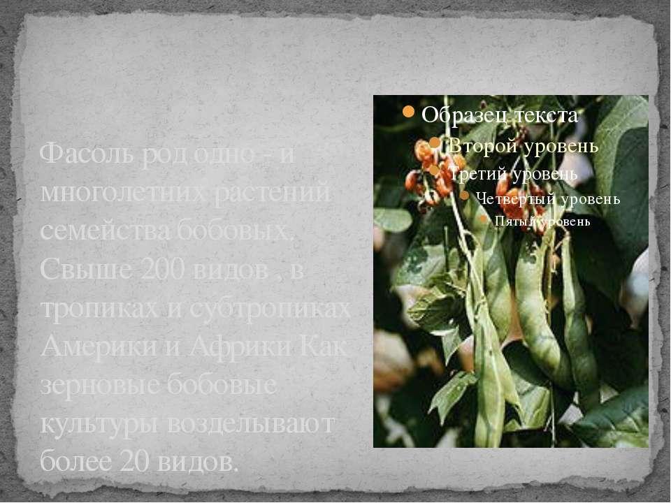 Фасоль род одно - и многолетних растений семейства бобовых. Свыше 200 видов ,...