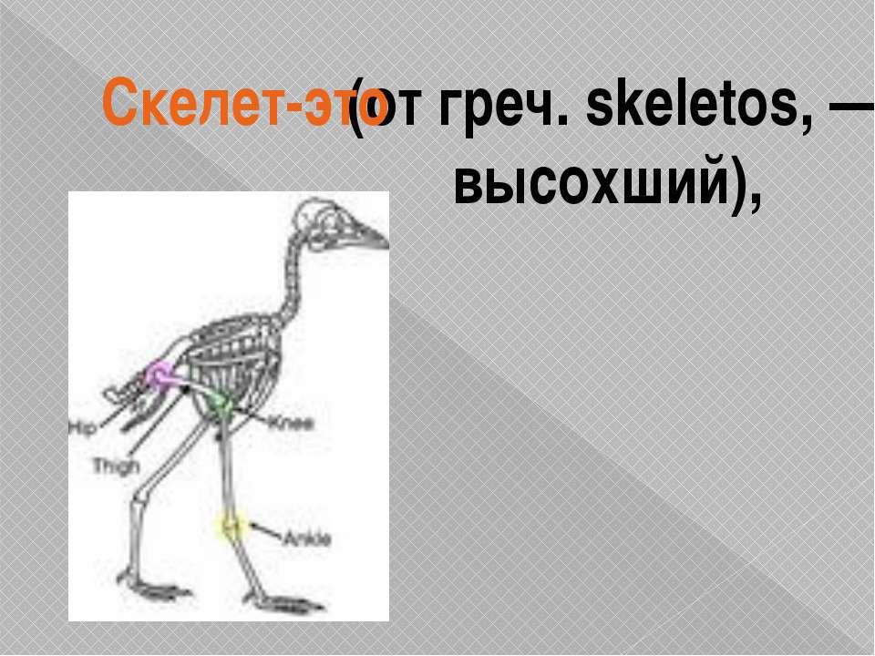 (от греч. skeletos, — высохший), Скелет-это