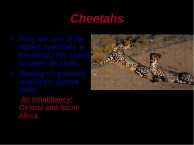 Cheetahs They are one of the fastest mammals in the world.( His speed is near...