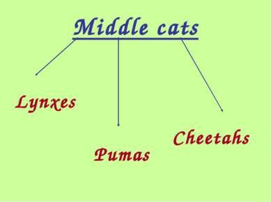 Middle cats Lynxes Pumas Cheetahs
