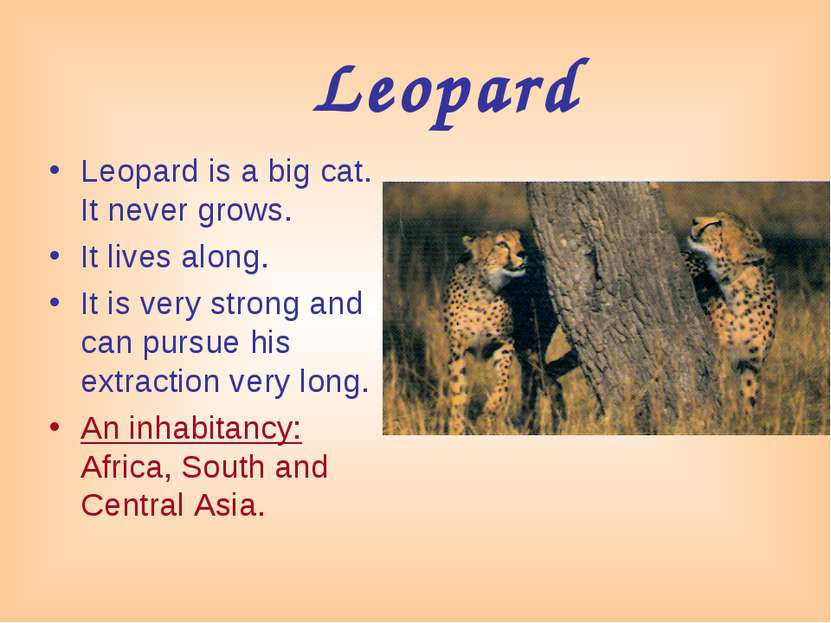 Leopard Leopard is a big cat. It never grows. It lives along. It is very stro...