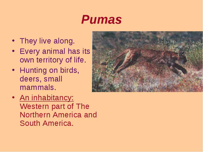 Pumas They live along. Every animal has its own territory of life. Hunting on...