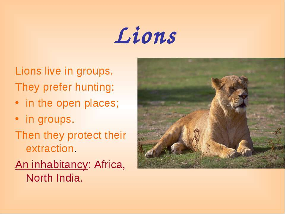 Lions Lions live in groups. They prefer hunting: in the open places; in group...
