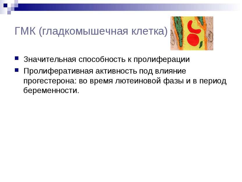 ГМК (гладкомышечная клетка) Значительная способность к пролиферации Пролифера...