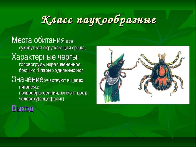 Класс паукообразные Места обитания вся сухопутная окружающая среда. Характерн...