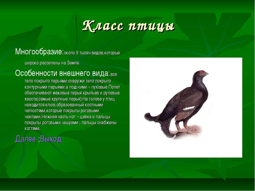 Класс птицы Многообразие:около 9 тысяч видов,которые широко расселены на Земл...