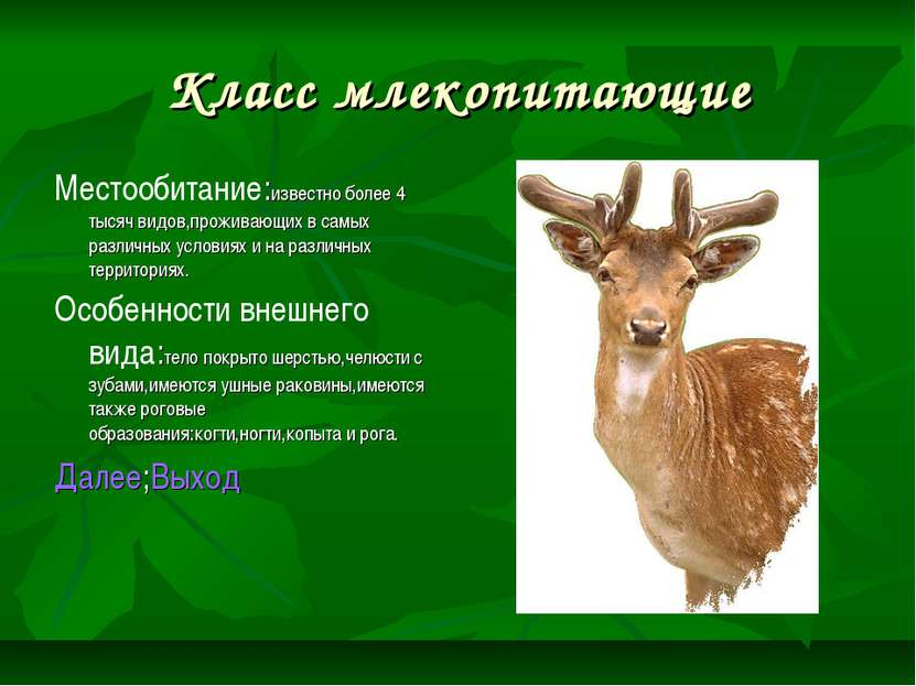 Класс млекопитающие Местообитание:известно более 4 тысяч видов,проживающих в ...