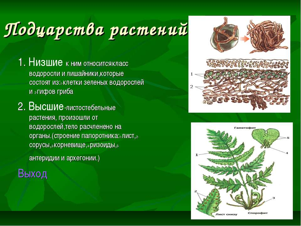 Подцарства растений 1. Низшие к ним относится класс водоросли и лишайники,кот...