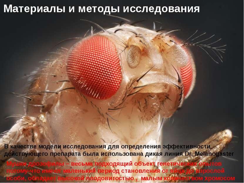 Домащенко А.Н. В качестве модели исследования для определения эффективности д...
