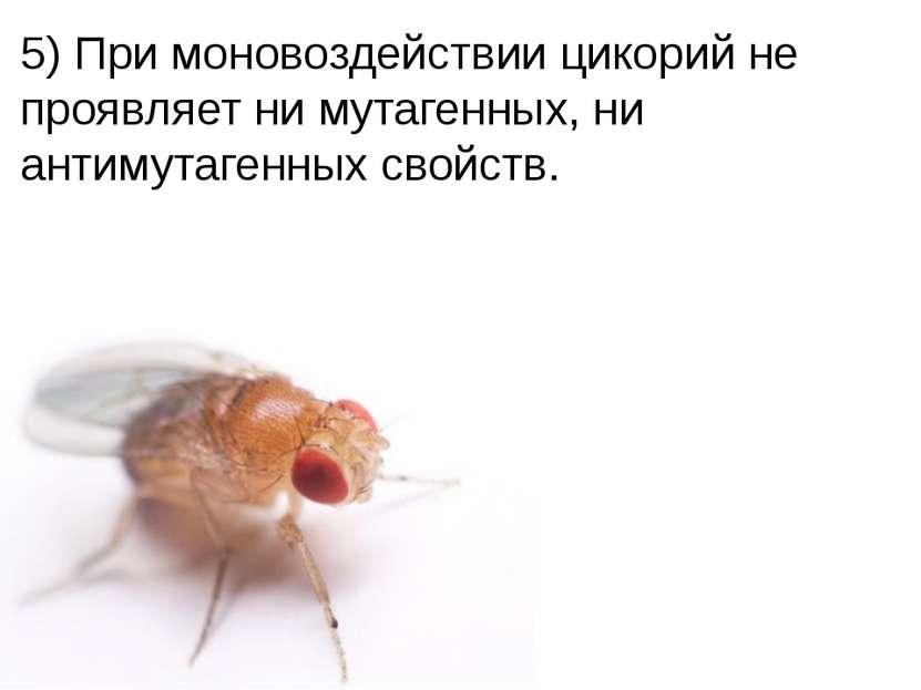 Домащенко А.Н. 5) При моновоздействии цикорий не проявляет ни мутагенных, ни ...