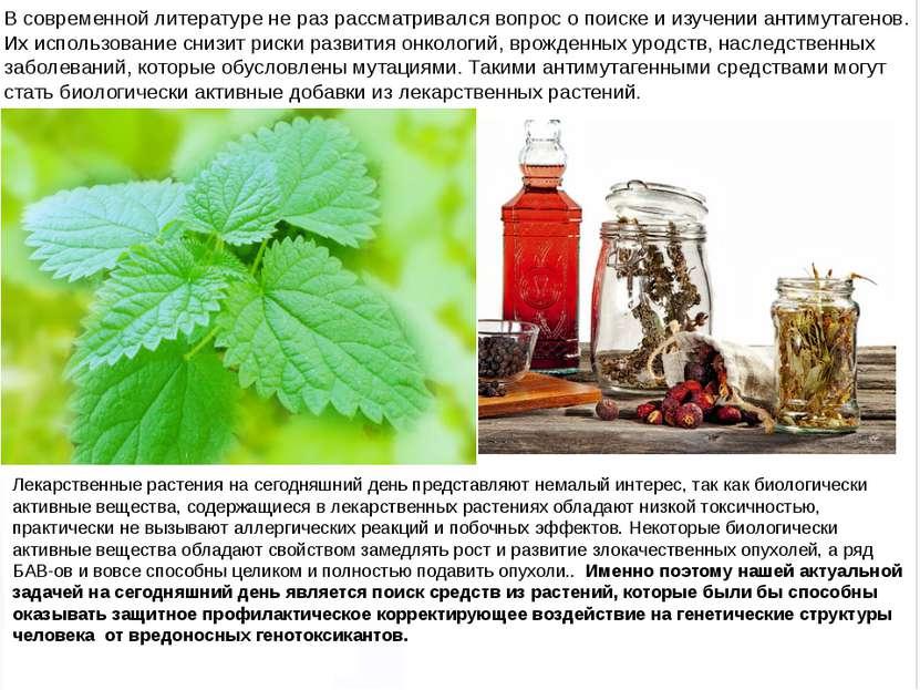 Домащенко А.Н. Лекарственные растения на сегодняшний день представляют немалы...