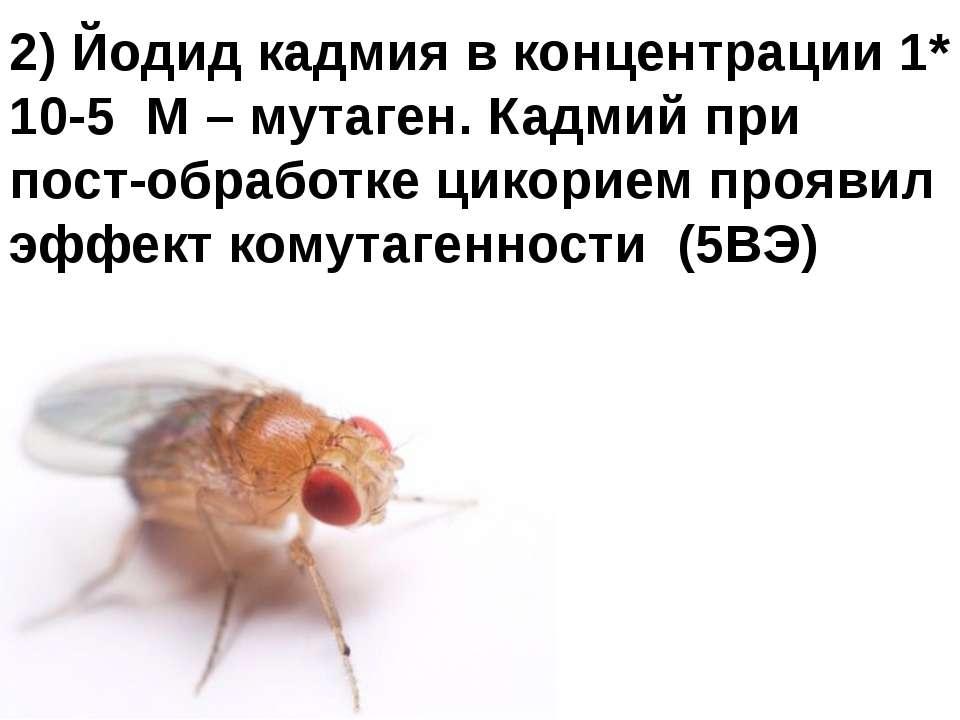 Домащенко А.Н. 2) Йодид кадмия в концентрации 1* 10-5 М – мутаген. Кадмий при...