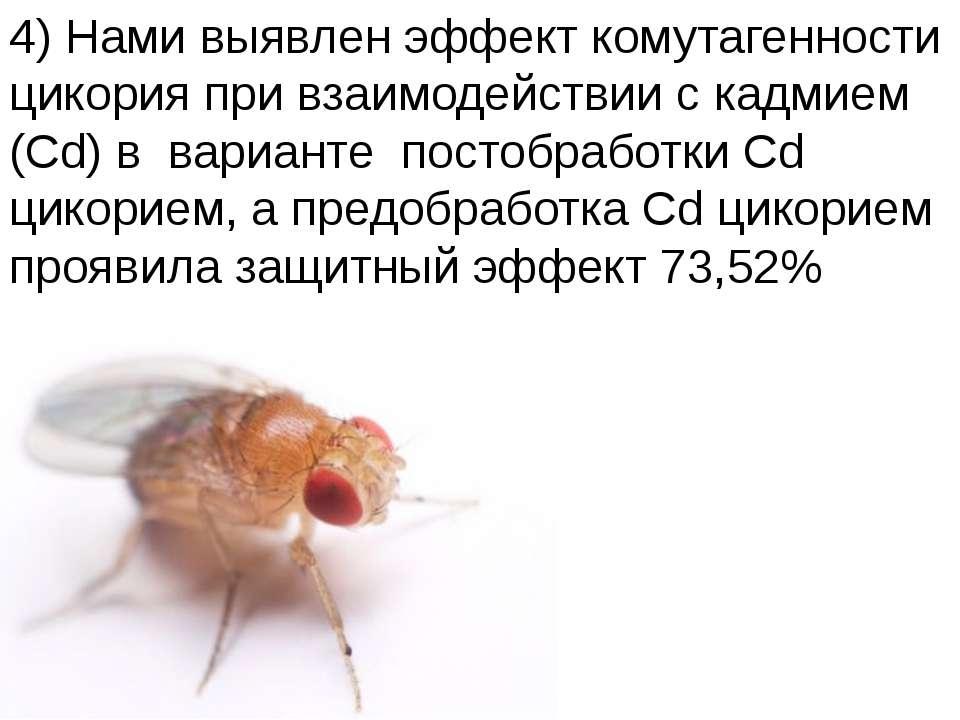 Домащенко А.Н. 4) Нами выявлен эффект комутагенности цикория при взаимодейств...