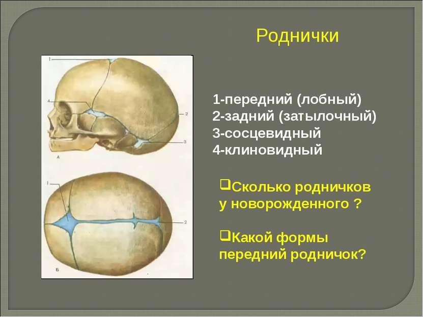 Роднички 1-передний (лобный) 2-задний (затылочный) 3-сосцевидный 4-клиновидны...