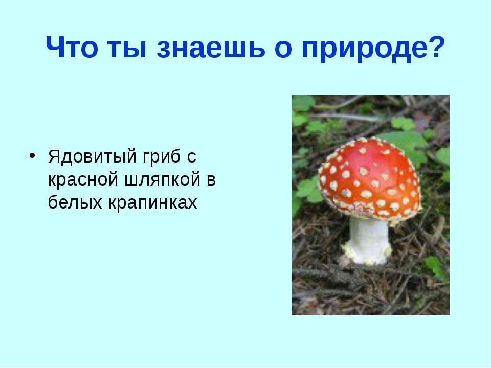 Что ты знаешь о природе? Ядовитый гриб с красной шляпкой в белых крапинках