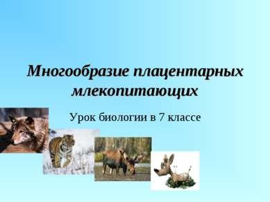 Многообразие плацентарных млекопитающих Урок биологии в 7 классе