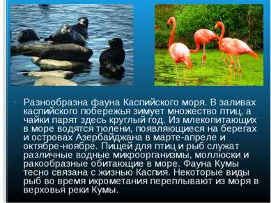 Разнообразна фауна Каспийского моря. В заливах каспийского побережья зимует м...
