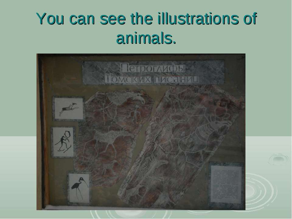 You can see the illustrations of animals.