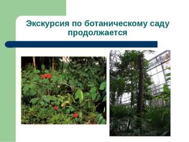 Экскурсия по ботаническому саду продолжается
