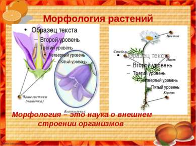 Морфология растений М Морфология – это наука о внешнем строении организмов.