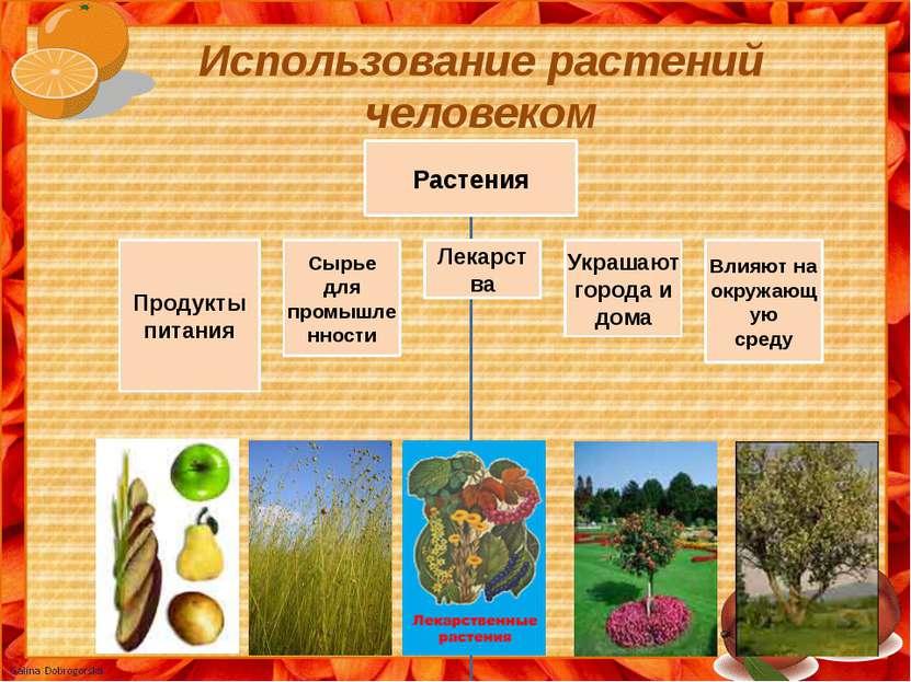 Использование растений человеком