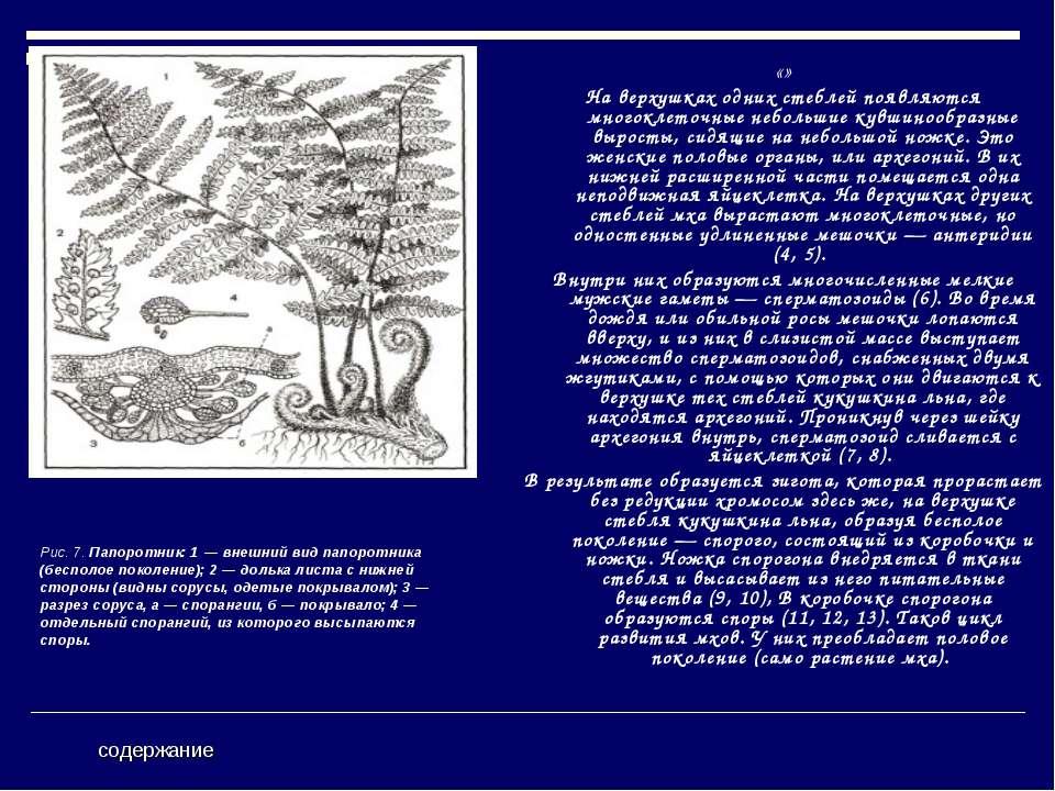 «» На верхушках одних стеблей появляются многоклеточные небольшие кувшинообра...