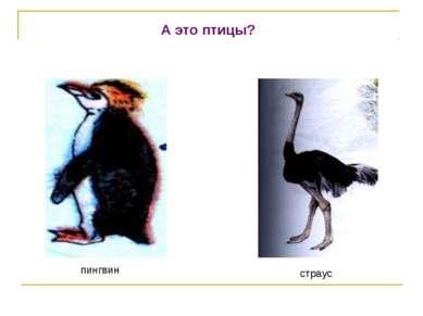А это птицы? пингвин страус