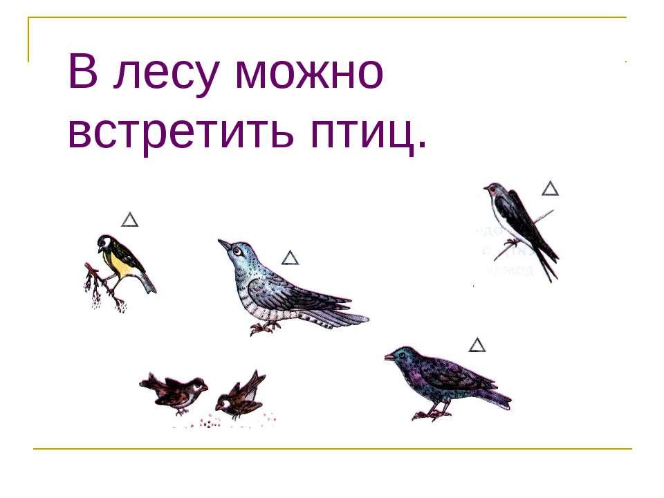 В лесу можно встретить птиц.