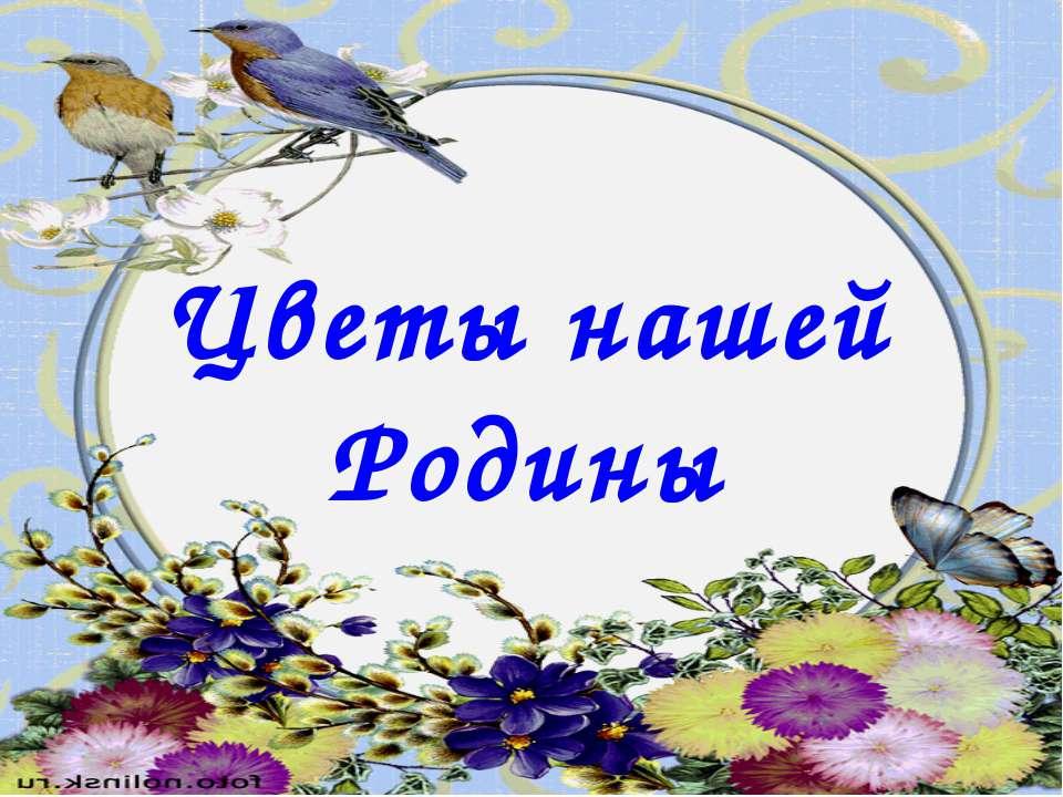 Цветы нашей Родины
