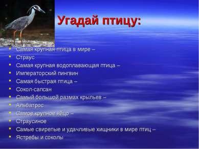 Угадай птицу: Самая крупная птица в мире – Страус Самая крупная водоплавающая...