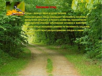 Значение птиц Птицы – важное звено в цепях питания. Насекомоядные птицы сокра...
