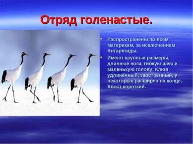 Отряд голенастые. Распространены по всем материкам, за исключением Антарктиды...