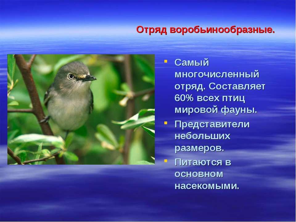 Отряд воробьинообразные. Самый многочисленный отряд. Составляет 60% всех птиц...