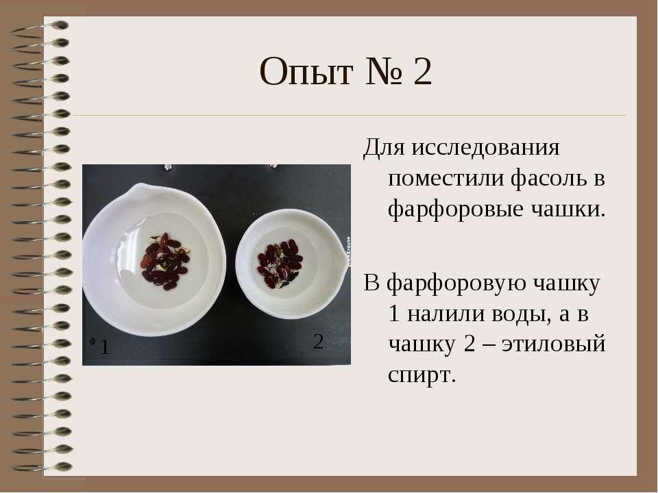 Опыт № 2 Для исследования поместили фасоль в фарфоровые чашки. В фарфоровую ч...