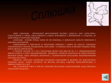 КРИК СПЛЮШКИ - ПЕЧАЛЬНЫЙ МЕЛОДИЧНЫЙ ПОСВИСТ «СПЛЮ-Ю» ИЛИ «СПЛЮ-ПЛЮ», ОДНОСЛОЖ...