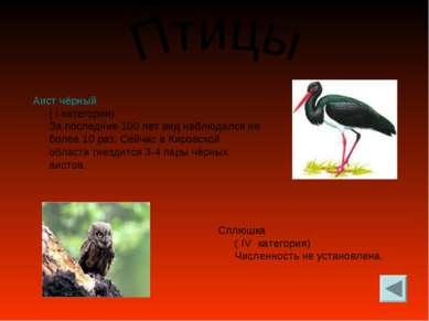 Аист чёрный ( I категория) За последние 100 лет вид наблюдался не более 10 ра...