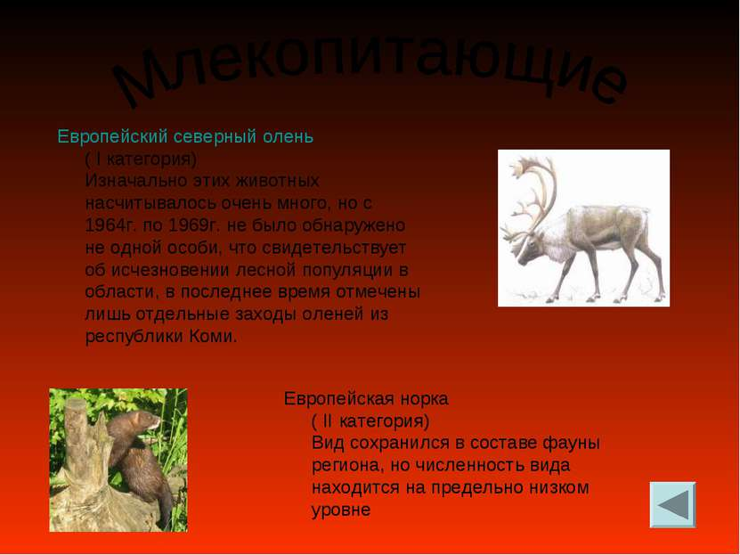 Европейский северный олень ( I категория) Изначально этих животных насчитывал...
