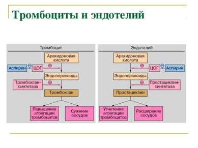 Тромбоциты и эндотелий