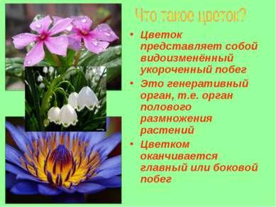 Цветок представляет собой видоизменённый укороченный побег Это генеративный о...