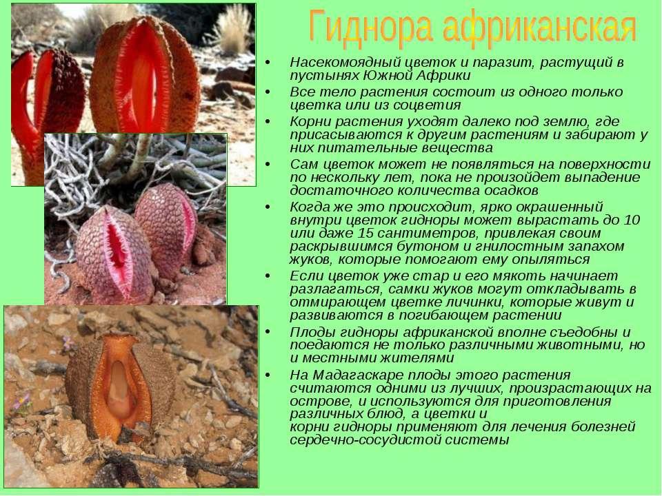 статья о паразитах в организме человека