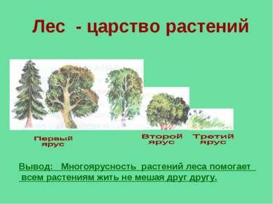 Лес - царство растений Вывод: Многоярусность растений леса помогает всем раст...